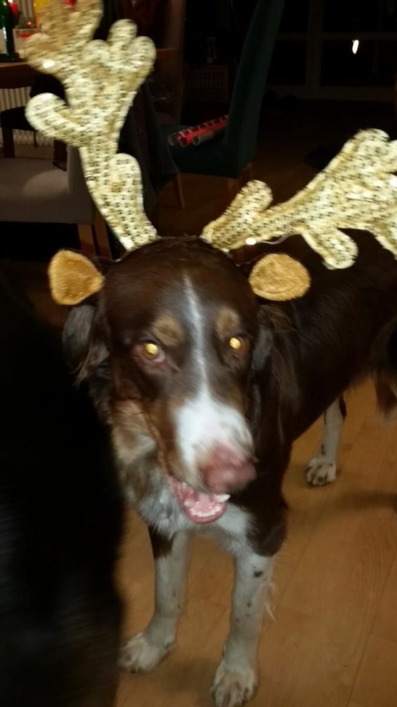 hier mal was Besinnliches: der Weihnachts-Elch. Aber obacht liebe Kinder: Vielleicht ist es auch der böse Wolf..