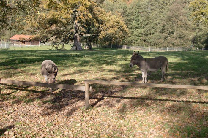 Tierpark Sababurg