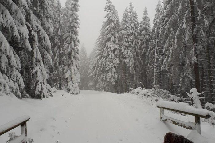 Wer Schnee will, soll in den Harz fahren