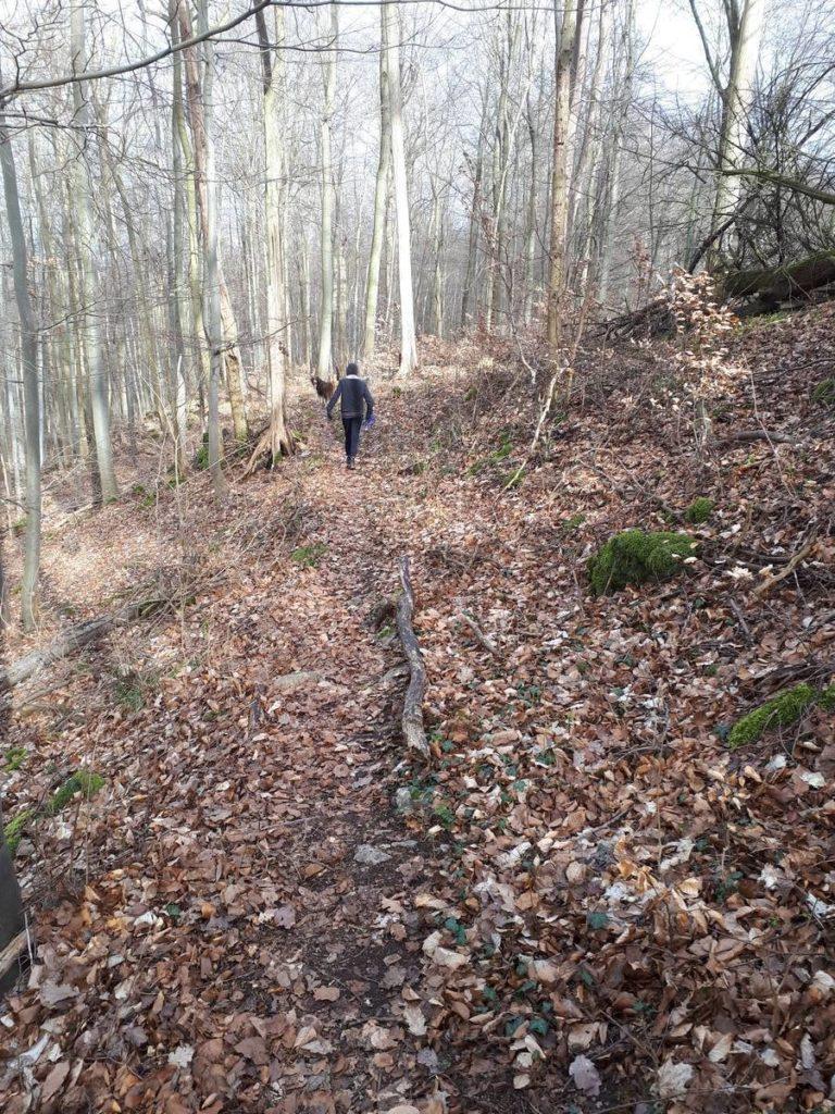 Wanderweg von Ahrenberg zum Roßkopfturm